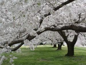 Весна, Ташкент, радость, аллергия, доброта